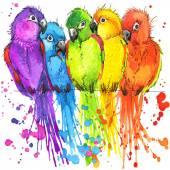 Triko grafické barevné papoušky, ilustrace akvarel