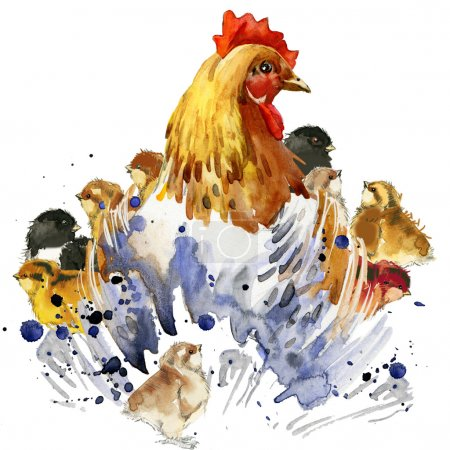 chicken hen and chickens T-shirt graphics, chicken family illustration with splash watercolor textured background. illustration watercolor chicken family fashion print, poster for textiles, fashion design