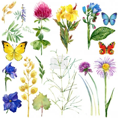 Summer rural field Herb flowers and butterfly background. watercolor illustration