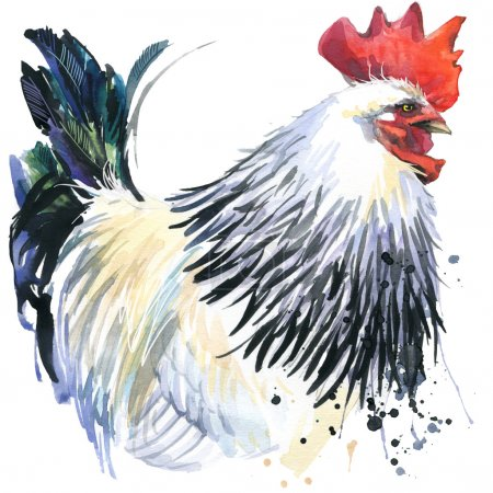 rooster graphics, rooster illustration with splash watercolor textured background. illustration watercolor breeding rooster fashion print, poster for textiles, fashion design