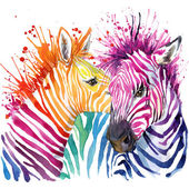 Funny zebra  T-shirt graphics, rainbow zebra illustration with splash watercolor textured background. illustration watercolor Funny zebra fashion print, poster for textiles, fashion design