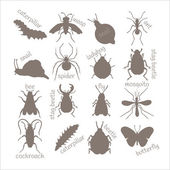 Insects. Contour image.