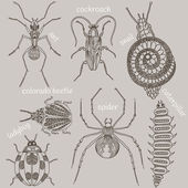 Insects. Seven bugs