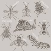 Insects. 8 bugs