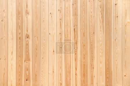 Photo for Pine wood texture - Royalty Free Image