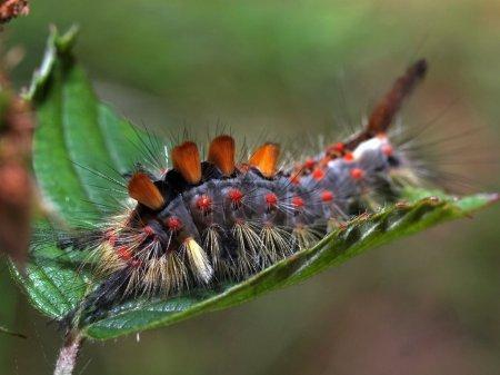 Macro close caterpillar