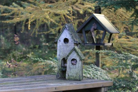 old weathered birdhouses