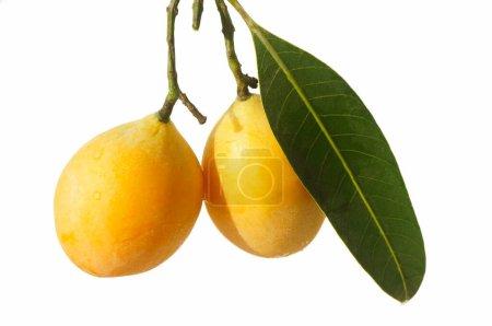 """Ciruela mariana, Gandaria, Mayongchid, Maprang, Ciruela Mango.Lat: """"Bouea Macrophylla"""" .En la foto, frutas y hojas con gotas de agua.Fondo blanco."""