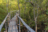 Bamboo walkway in mangrove forest. Selective Focus.