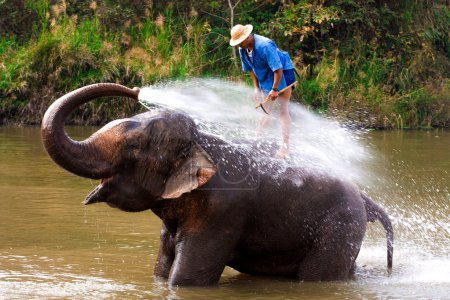 Big elephant bathing in the river, guided by their handler