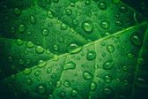Green leaf with waterdrops after rain