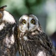 Two owls sitting on a barling and looking around...