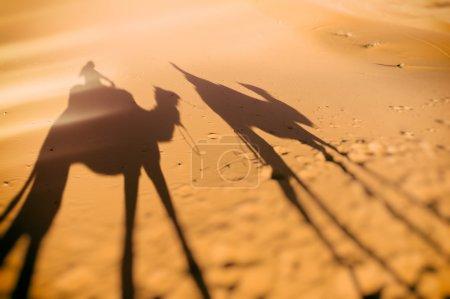 Camel ride shadows, Sahara, Morocco