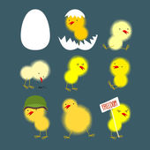 Set of yellow chicks: white egg and chicken Chick protests and chicken in a helmet Vector illustratio