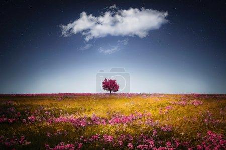 Photo for Spring tree, landscape, stars, tree, kosovo, flower - Royalty Free Image