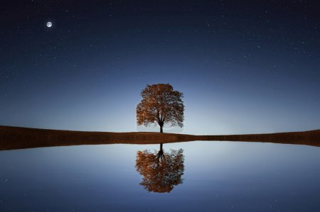 Photo pour Lone tree near lake at night with reflection in water - image libre de droit