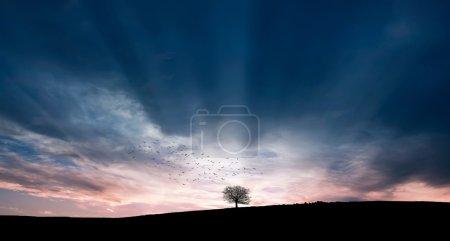 Photo pour Oiseaux sur arbre solitaire - image libre de droit