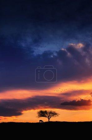 Photo pour Arbre au coucher du soleil - image libre de droit