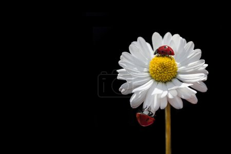 Photo for Lady on flower - Royalty Free Image