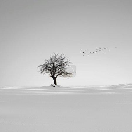Photo pour Paysage hiver - image libre de droit