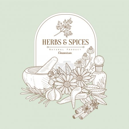 Illustration for Herbs and Spices, Handdrawn Vector Illustration Banner - Royalty Free Image