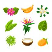 Tropical Plants And Fruits Set In Simple Realistic Cartoon Flat Vector Design Isolated On White Background