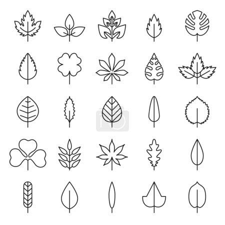 Leaf vector, flora, linear style black contour