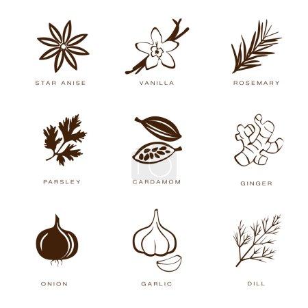 Illustration pour Icône d'épices sur fond blanc - image libre de droit