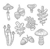 Black and White Acorns Leaves Berries Handdrawn Style Vector illustration