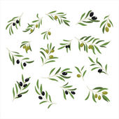 Olive Branches Vector Illustration