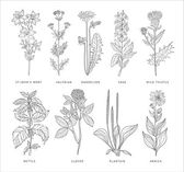 Medical Herbs Vector Set