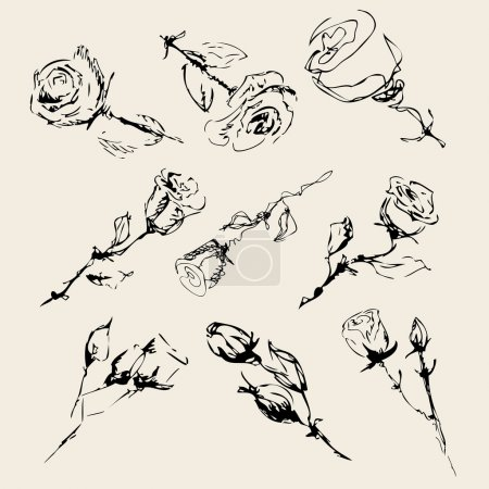 Illustration for Sketch of roses on a beige background . vector - Royalty Free Image