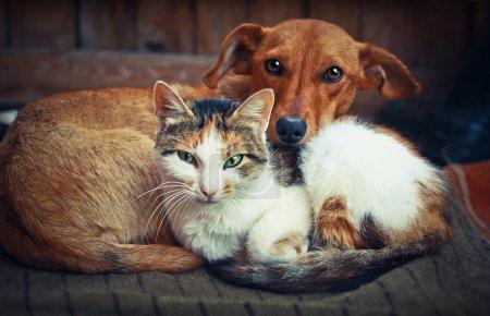 Photo pour Mignon chien avec chat. L'amour - image libre de droit