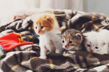 White and orange newborn kitten in a plaid blanket