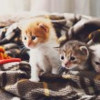 Постер, плакат: White and orange newborn kitten in a plaid blanket