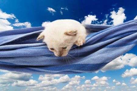Cute white kitten in hammock isolated at blue sky