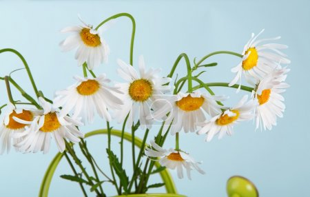 Beautiful daisies bouquet in green watering can