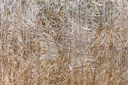 Textura de primer plano de paja seca. Contexto agrícola