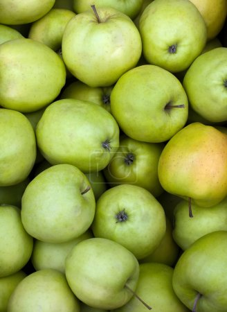 Photo for Green fresh juicy apples closeup shot - Royalty Free Image