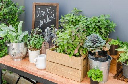 Photo pour Plantes vertes et légumes avec outils de jardin sur table en bois - image libre de droit
