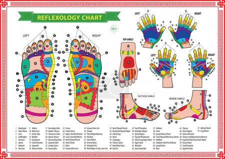Illustration for Foot and Hand reflexology chart with accurate description of the corresponding internal and body parts. Vector illustration over white background, isolated. - Royalty Free Image