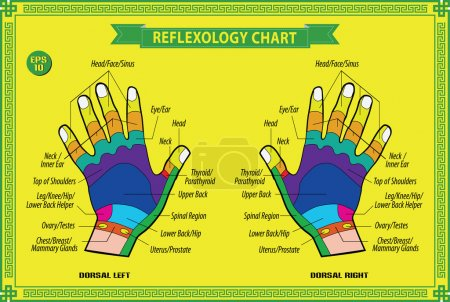 Illustration for Hand reflexology chart with accurate description of the corresponding internal and body parts. Vector illustration - Royalty Free Image