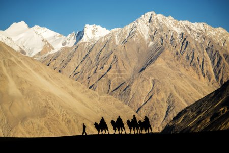 Silhouette of caravan travellers riding camels Nubra Valley Ladakh ,India