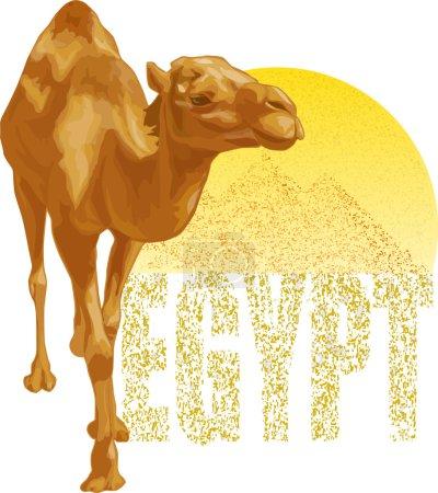 Illustration pour Image vectorielle d'un chameau sur un fond de pyramides - image libre de droit