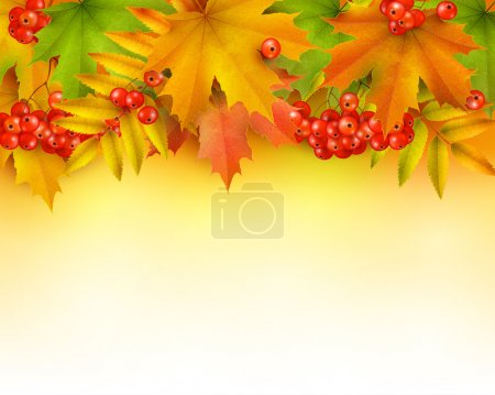 Illustration for Vector - Autumn background or border, colorful autumn leaves and rowan berries - Royalty Free Image