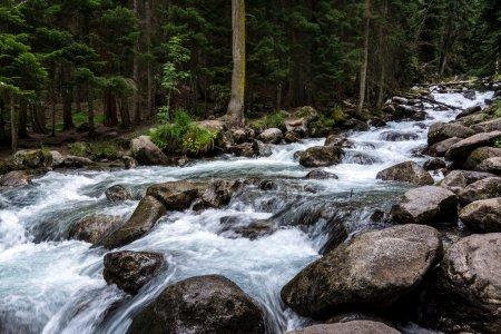 Gonachkhir - mountain river in Dombai, Karachai-Cherkessia.