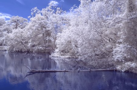 A pond in the woods - Infrared landscape