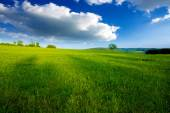 Summer landscape with green grass and clouds.