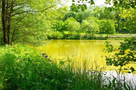 Photo pour Vagues sur l'eau du lac et le vert des arbres. Le lac et le vert des arbres forestiers. - image libre de droit