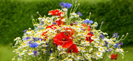 Photo for Wild flower bouquet with poppies daisies and cornflowers. Wild flowers isolated on green background. - Royalty Free Image